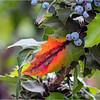 Holly leaf...