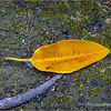 Golden leaf...
