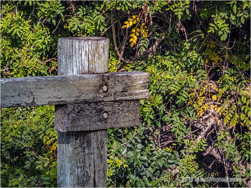 Fence post...