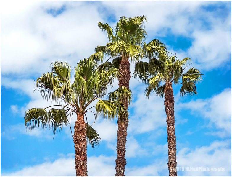 Three Palms...