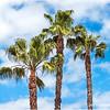 Three Palms...