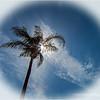 Tall Palm...