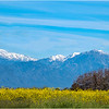The San Gabriel Mountains...