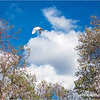 Trees, clouds and a Snowy egret...