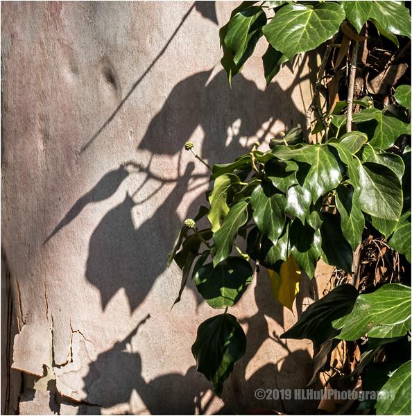 Shadows...