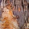 Palm bark...