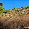 Cactus on a hillside...