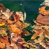 Floating Leaves...