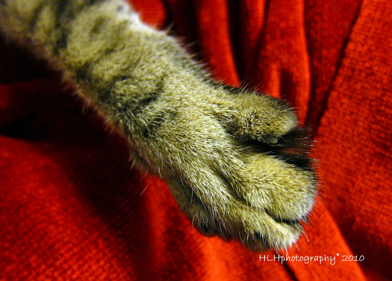 The Cat's Paw...as opposed to the Cat's Meow.