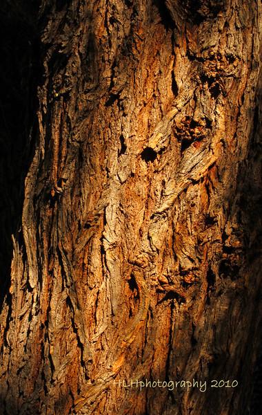 Pepper Tree Bark