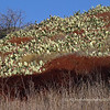 11.4.10<br /> <br /> Cactus...<br /> Schabarum Regional Park, Rowland Hts, CA<br /> <br /> Best in X2