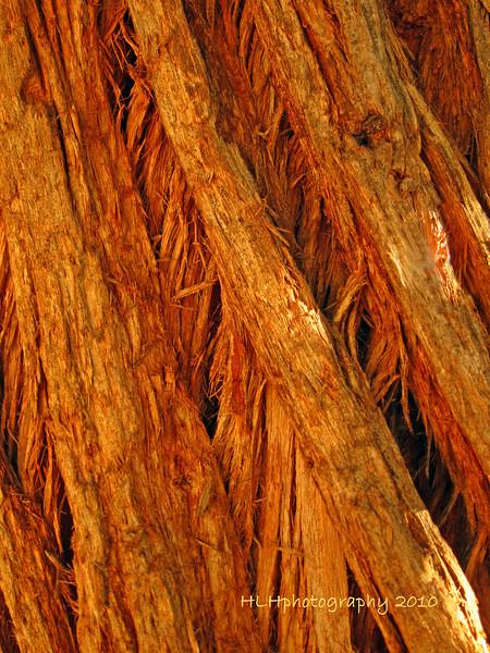 Eucalyptus Tree Bark