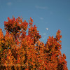 12.27.10<br /> <br /> moon shot...
