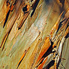 Eucalyptus Tree Bark<br /> <br /> Thanks for all of your comments this last week. Much appreciated!<br /> <br /> Have a great Sunday!