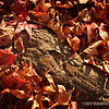 leaves and bark...<br /> <br /> February 13, 2012