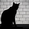 Bully...<br /> <br /> On a recent visit to our sons' new home, I saw Brian's cat, Bullet (Bully for short), on one of his favorite perches, the window sill. Having my pocket camera at the ready, I caught this silhouette...meeoow...<br /> <br /> Critiques welcome...<br /> <br /> October 4, 2012