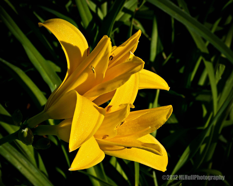 Day Lily...<br /> <br /> Our thoughts, prayers and condolences go out to all affected by the horrific tragedy at the Sandy Hook Elementary School in Newtown, Connecticut.<br /> <br /> December 15, 2012