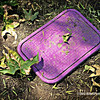 lavender...<br /> <br /> Spotted this unusual lavender colored utility cover in a local park...<br /> <br /> May 4, 2012