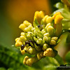 ant on lantana buds...<br /> best in larger sizes<br /> <br /> Critiques welcome...<br /> <br /> September 14, 2012