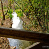a stream runs through it...<br /> <br /> Fullerton Arboretum<br /> Fullerton, CA<br /> <br /> February 14, 2013