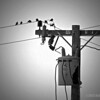 birds on a wire...<br /> <br /> posting late due to internet issues... : (<br /> <br /> Critiques welcome...<br /> <br /> September 22, 2012