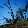 no clue what this plant is/was, but liked the silhouetted effect against the bright blue sky...  <br /> <br /> Bolsa Chica Wetlands<br /> Huntington Beach, CA<br /> <br /> February 11, 2012
