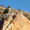 """bird on a rock...<br /> <br /> N. Lykken Trail, <br /> Palm Springs, CA<br /> <br /> Have a great Earth Day Sunday, and thanks so much for all your comments this last week, greatly appreciated!<br /> <br /> """"For ever since the world was created, people have seen the earth and sky. Through everything God made, they can clearly see his invisible qualities—his eternal power and divine nature. So they have no excuse for not knowing God."""" Romans 1:20 NLT     <a href=""""http://www.biblegateway.com/"""">http://www.biblegateway.com/</a><br /> <br /> <br /> April 22, 2012"""