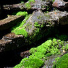 "July 14, 2010 - ""Watching Moss Grow""<br /> <br /> This moss came out of the shadows just for me at the Berry Ford Alpine Gardens in Vail, Colorado!"