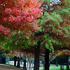"November 22, 2010 - ""North Texas Color""<br /> <br /> This image shot yesterday is about as much autumn color as we get in our neighborhood here in North Texas."
