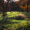 "November 24, 2010 - ""A Beautiful Texas Morning""<br /> <br /> Yesterday morning I went to the the Bob Jones Nature Center to try some different bracket settings for an HDR image of the old barn. This image of a small part of the meadow was shot into the sun. The area shown is on the edge of a large area that is being restored to native prairie grassland."