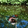 "July 18, 2010 - ""Reflections Of A Gardener""<br /> <br /> This was shot at the Betty Ford Alpine Gardens in Vail, Colorado.<br /> <br /> Yes, this really is a reflection. Here's the link to an alternate shot that also includes the gardener<br /> <br /> <a href=""http://www.dakotacowboyphotography.com/Photography/Daily-Photo-Proof-Alternates/8374515_pozc7#932548763_RyA7F"">http://www.dakotacowboyphotography.com/Photography/Daily-Photo-Proof-Alternates/8374515_pozc7#932548763_RyA7F</a>"
