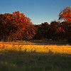 "November 27, 2010 - ""Texas Prairie Sunrise""<br /> <br /> This is a companion image to my Wednesday post of a smaller fringe area that was photographed into the sun.  All of your generous and unexpected comments on the other image were greatly appreciated.  So I thought I would try to better show the scale of this prairie restoration.<br /> <br /> This area is in the Cross Timbers ecosystem that consists of a swath of trees and prairie land stretching from present-day Kansas and Oklahoma and to just north of Waco, Texas along the Brazos River. The region represents a boundary between the forests of eastern North America and the southern Great Plains.<br /> <br /> This area of the Bob Jones Nature Center is being restored to the native prairie land ."