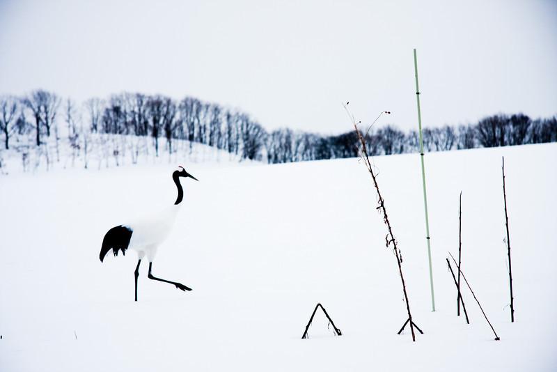 The lonely crane.<br /> Kushiro