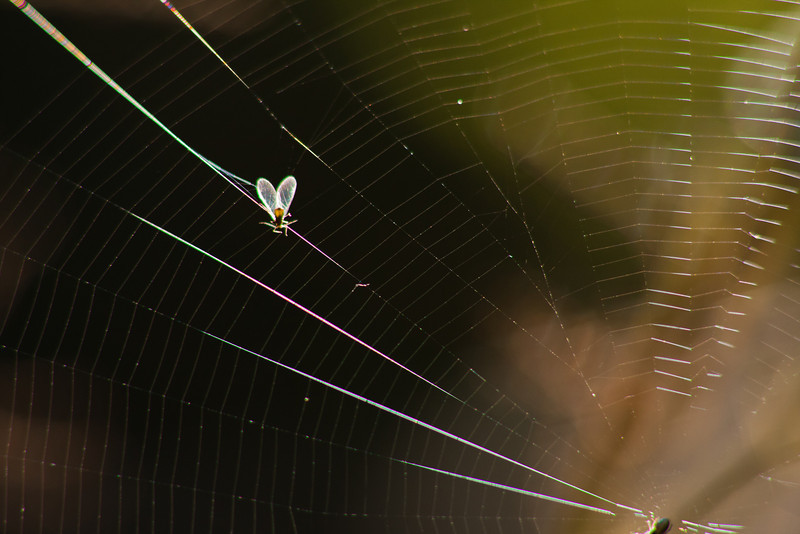 Fly caught in a web of trouble