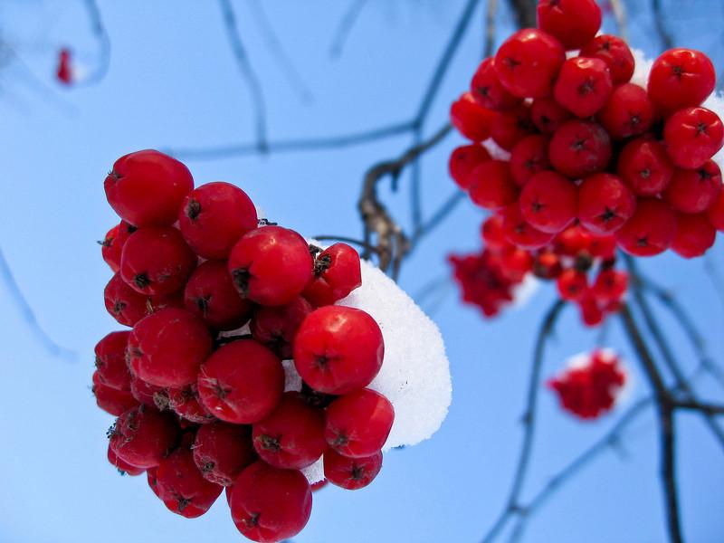'Snow berries'