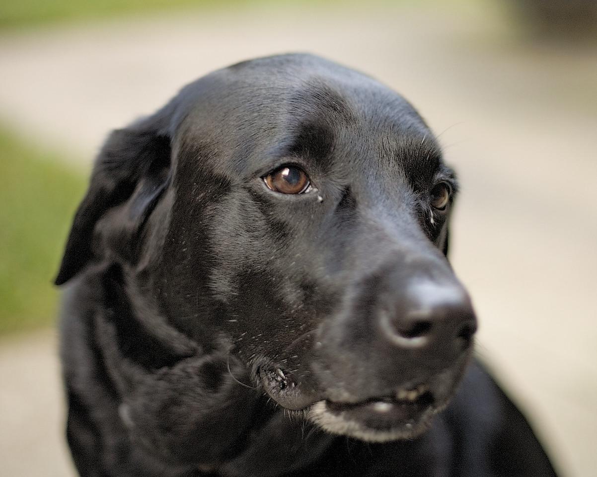 <h3>DOF Dog</h3> 17 September 2006