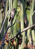 "Circumspect: Friend or Foe?<br /> <br /> (Sept. 20) UC Riverside Botanical Gardens.<br /> <br /> Here's an alternative shot:<br />  <a href=""http://chaosgraphics.smugmug.com/gallery/1841037/3/96794260"">http://chaosgraphics.smugmug.com/gallery/1841037/3/96794260</a>"