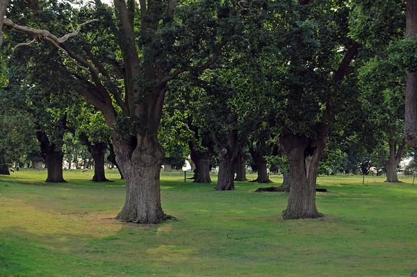 Risby Oaks