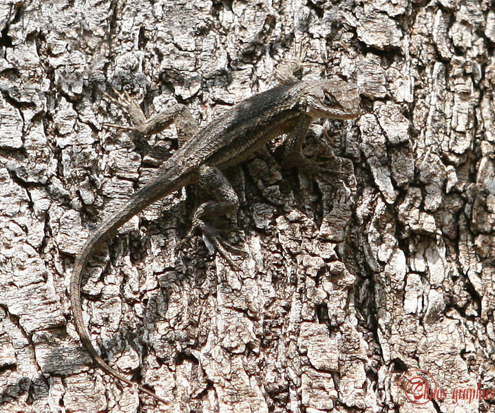 Lizard? What lizard?<br /> <br /> (March 23) I'm fascinated by camouflage. This is a bit of a crop.