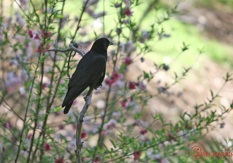 Spring unfolds<br /> <br /> (March 16) I came across this crow calmly taking in a beautiful day and a beautiful setting.