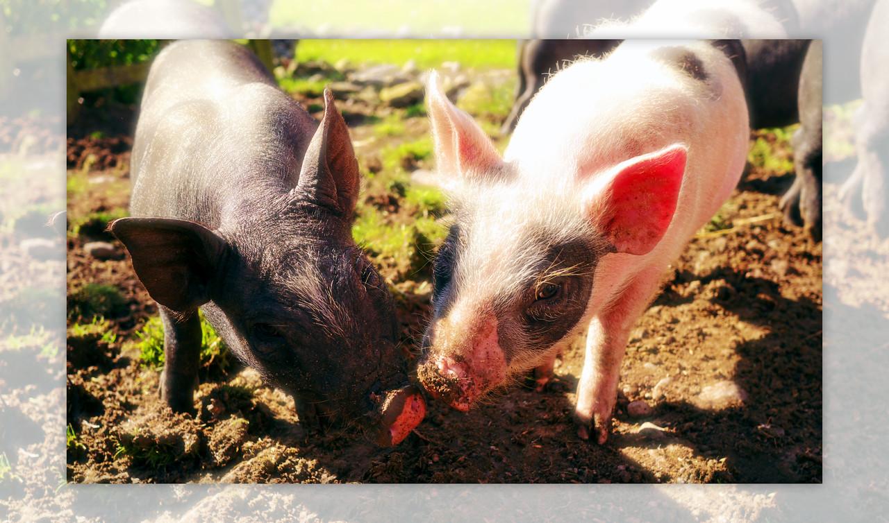 29/08/2011 'Two little friends on a farm'