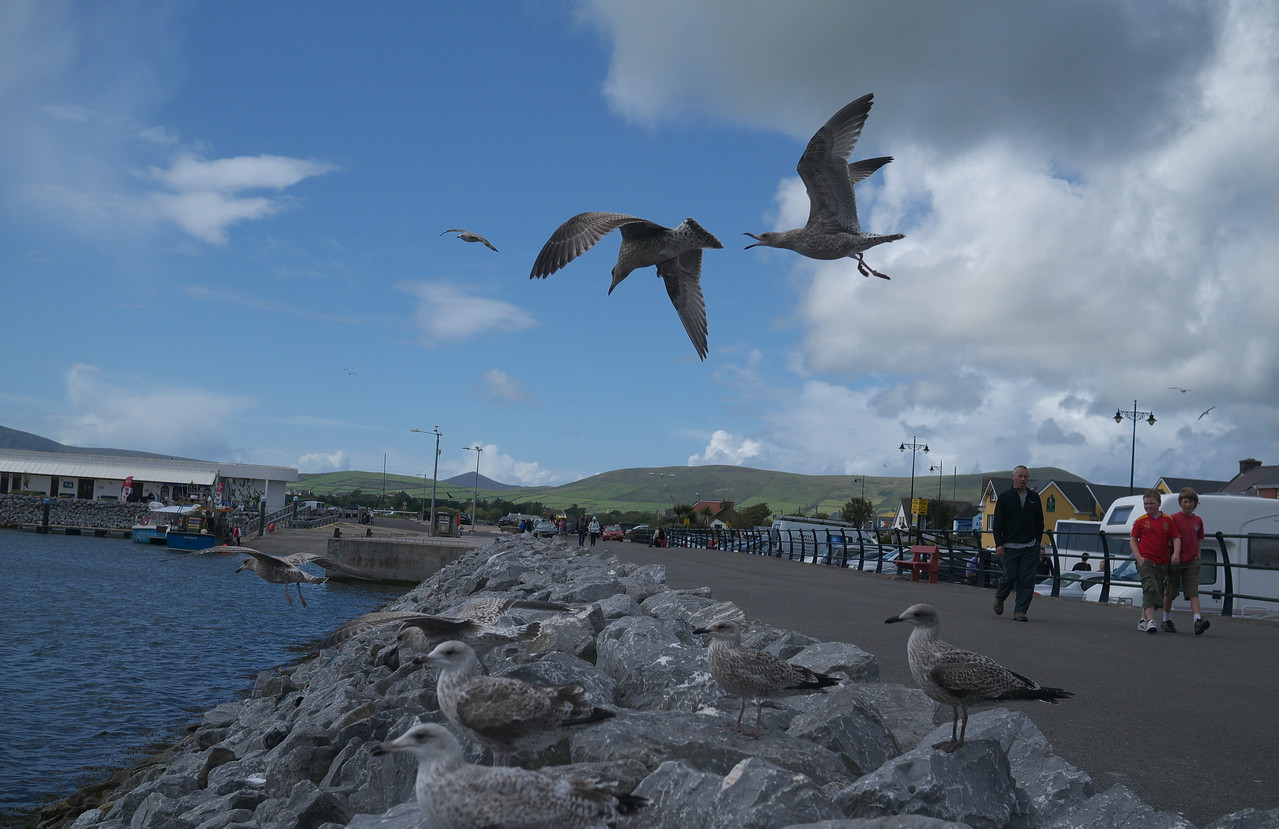 25/08/2011 'A Sunny afternoon on Dingle Pier'