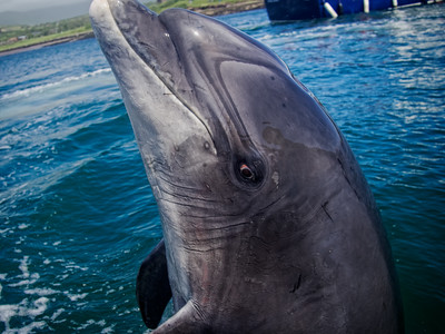 Fungie the Dingle Dolphin says Hello