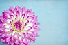 October 14, 2011<br /> I think this is the last one in this series.  I do love dahlias, so I'll probably post more in the future.  Happy Friday!