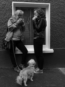 A hungry Dog at the Dingle Food Festival
