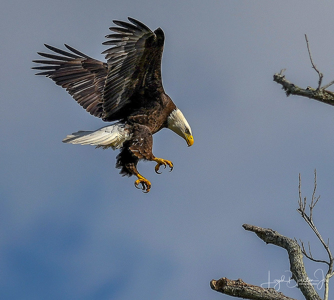 Eagles of Waller County