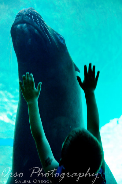 July 18, 2009.<br /> <br /> We went to the Zoo today and I took this photo of Noah as he watched the Sea Lion swim by. It kept swiming back and forth, and when it came close to the glass, Noah could not help by raise his hands ~ he was very excited to be at the Zoo today.