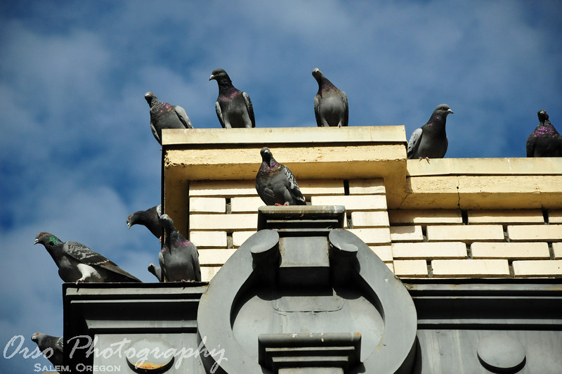 Sunday, October 23, 2011<br /> <br /> Gabe and I were walking downtown during a senior photo shoot on Saturday and came across this building with lots of birds on top. It seemed they were all looking at us as we approached.