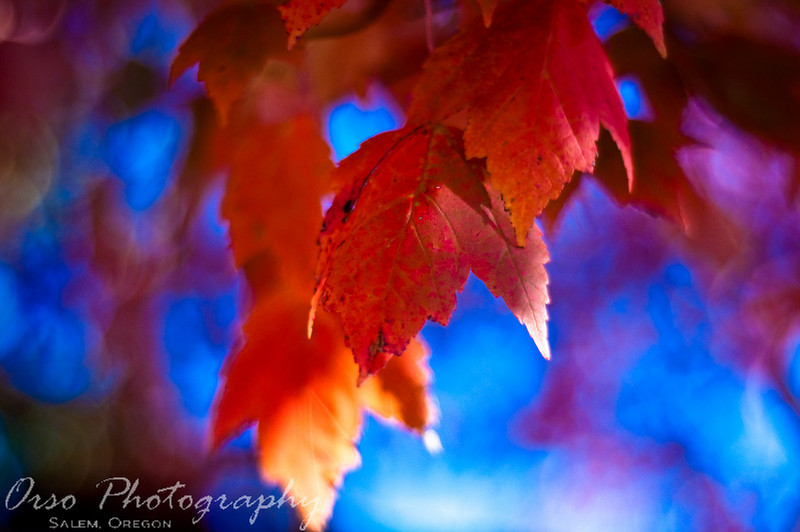 November 8 2009<br /> <br /> Another picture of plant life, this photo was taken around 5 P.M with a 50mm 1.8 lens, so it was very fast but I like the shade of blue contrasting with the red in the leaves.		<br /> 									-Gabe