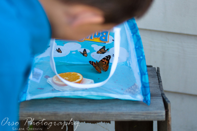 July 26, 2009.<br /> <br /> Noah got some caterpillars as a birthday present a few weeks ago. They come in a little cup, then crawl around and eventually attach themselves to the lid. A few days later, the butterflies hatch. This photo is of Noah letting the butterflies go in our front yard today. He was excited, happy, and sad, all the same time. The butterflies flew away quickly and all the way to church, Noah kept saying that he saw one of his butterflies friend when he spotted a little butterfly flying around.